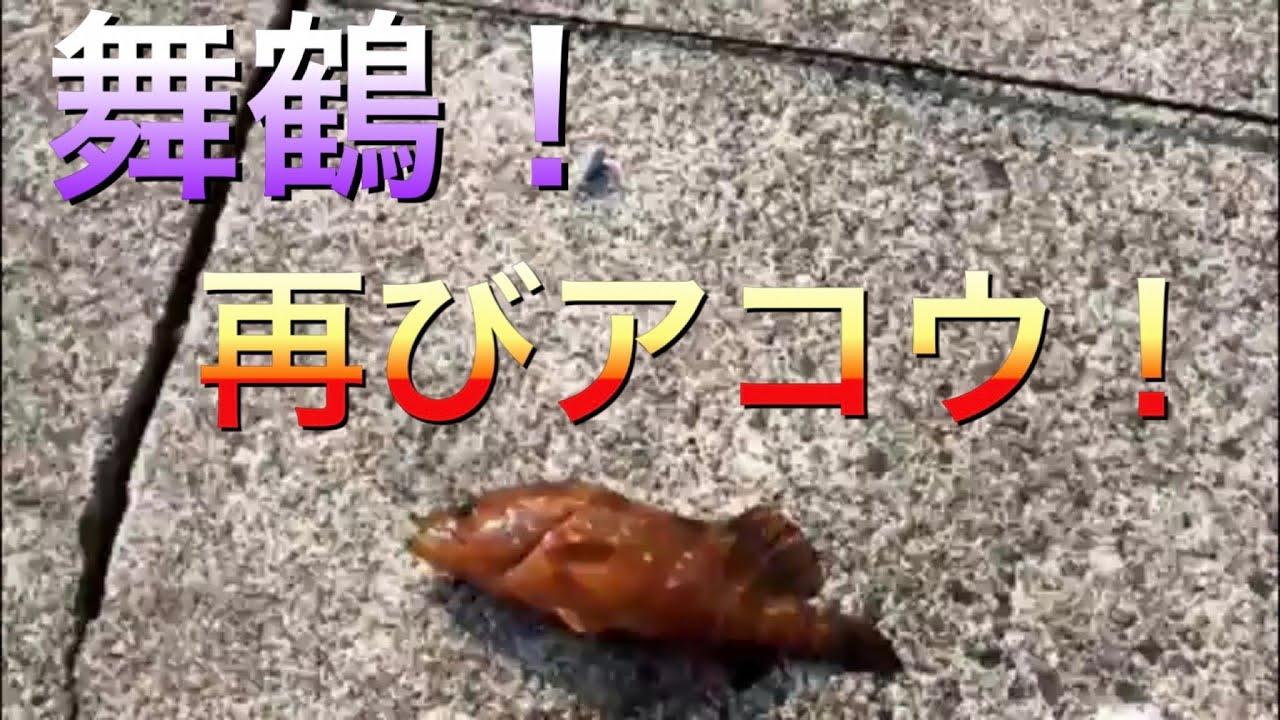 【舞鶴】日本海の超深い堤防で落とし込み釣り!