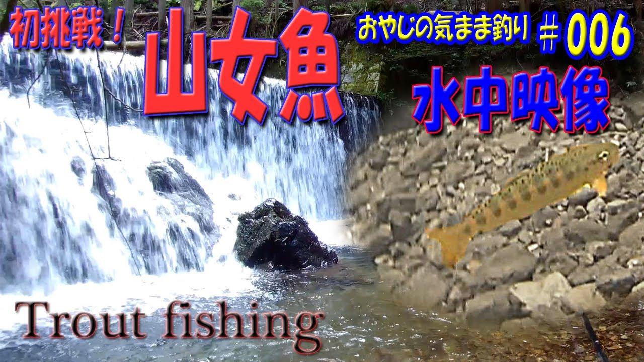 渓流 アマゴ釣り 水中映像あり