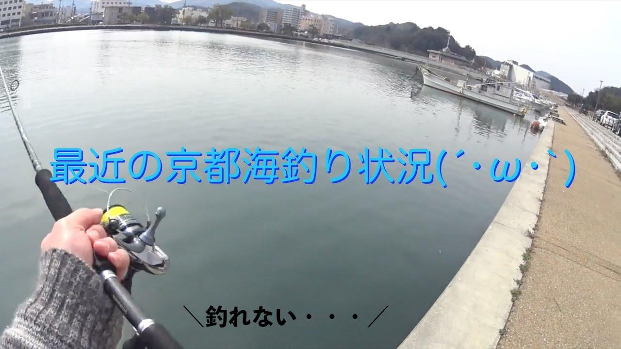最近の京都海釣り状況(´•ω•`)