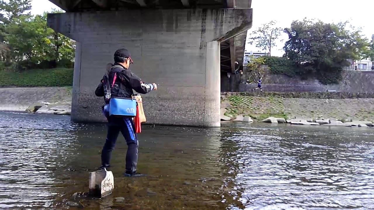 京都鴨川でのハエ釣りです♪