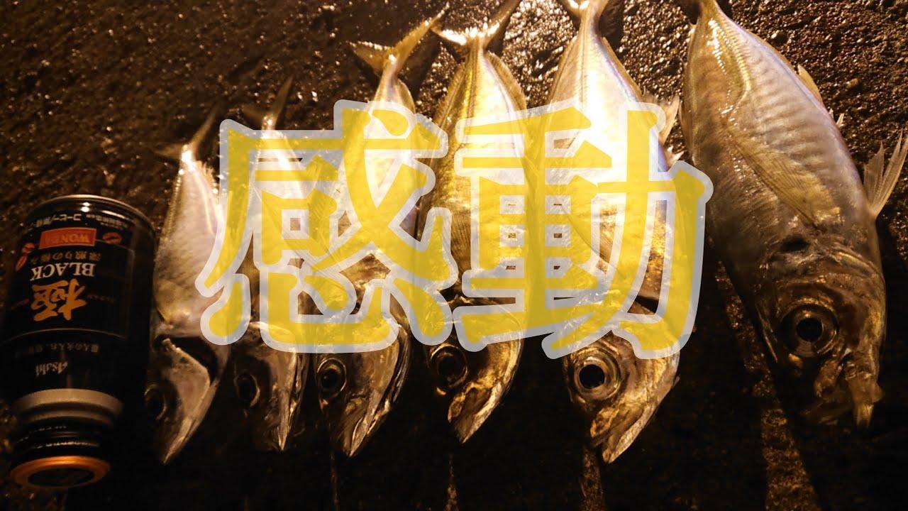 【泉大津でアジ釣り】感動した!震えた!釣りってやっぱり最高っ!