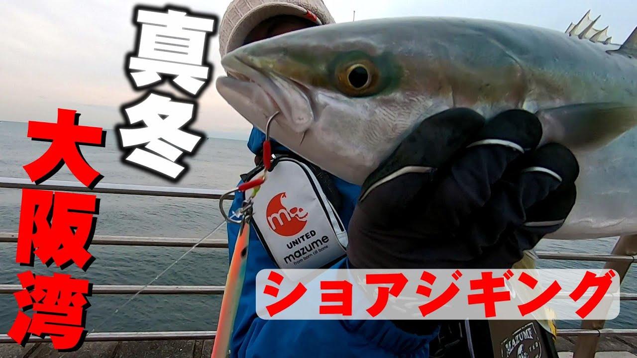 真冬の大阪湾で青物釣り!ショアジギングでメジロ!