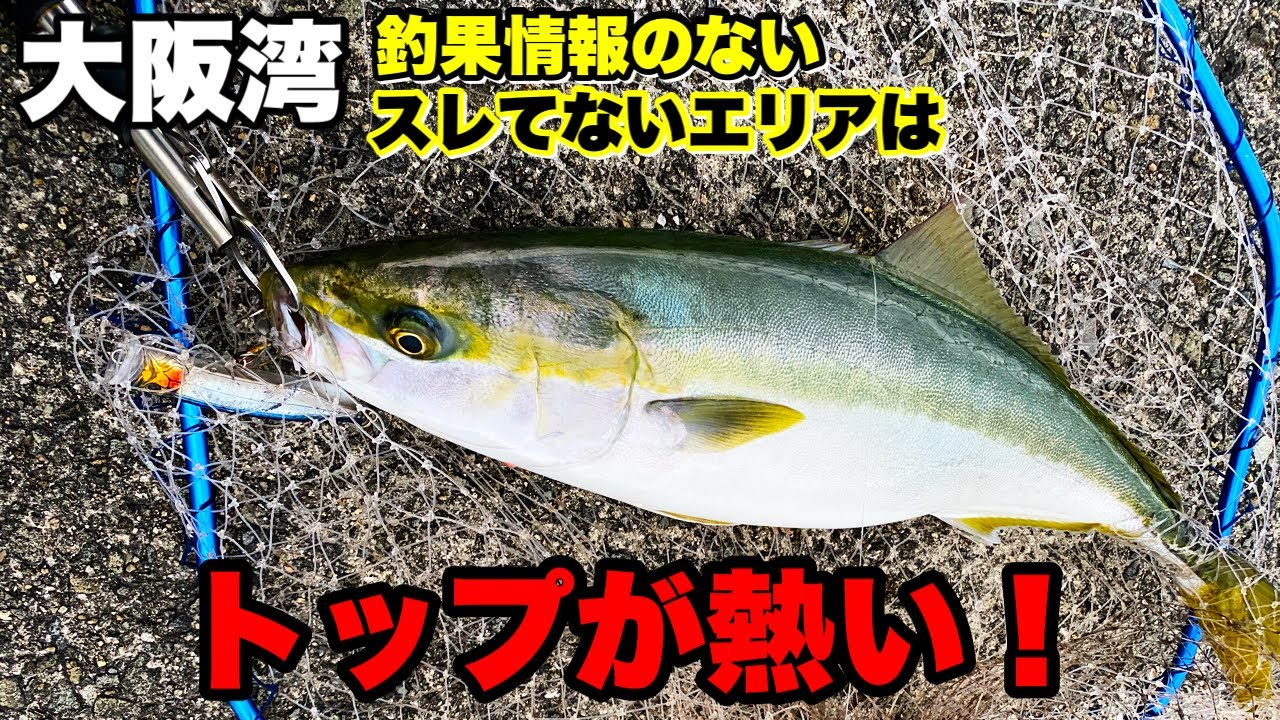 【青物】釣果情報のない無人ポイントに行ったら連発した!!