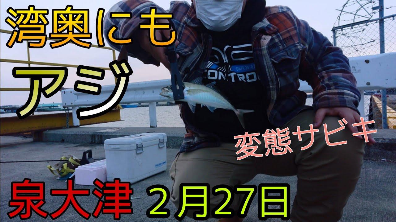 【泉大津 アジ釣り】サビキで湾奥攻めた!