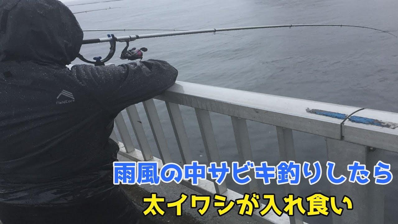 雨風の中サビキ釣りしたら太イワシが入れ食い