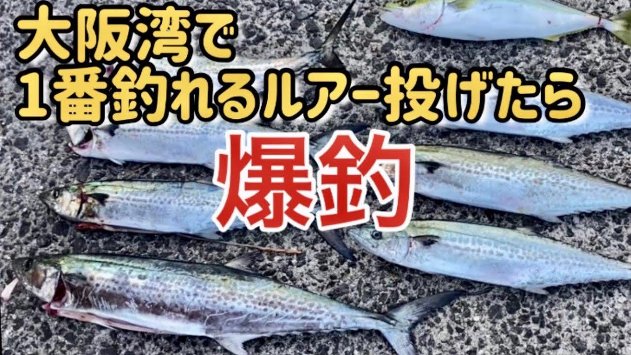 ショアジギ 、今大阪湾で1番釣れるルアー投げたら偉い事になった