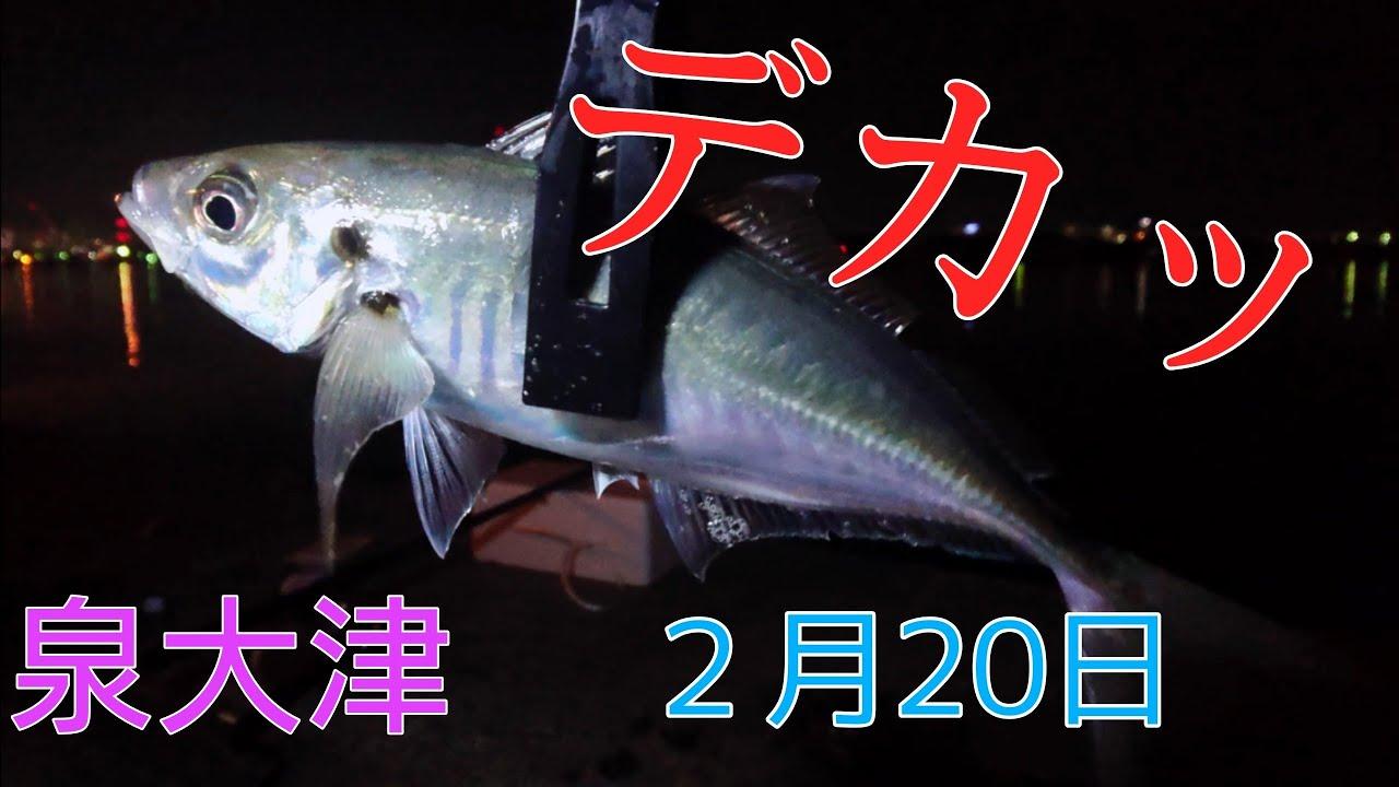 【泉大津でサビキ釣り】2月中旬やけど、おったー!