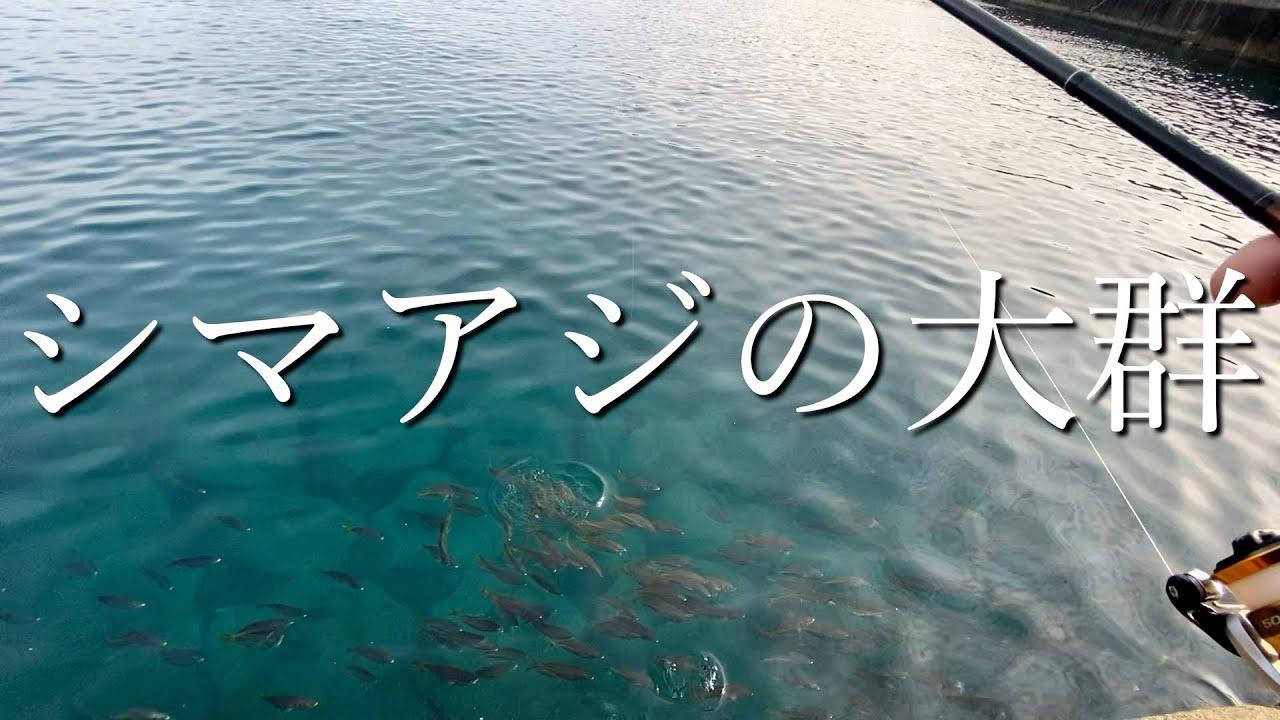 魚影が濃い事で有名な串本なら初心者でも釣れる説!