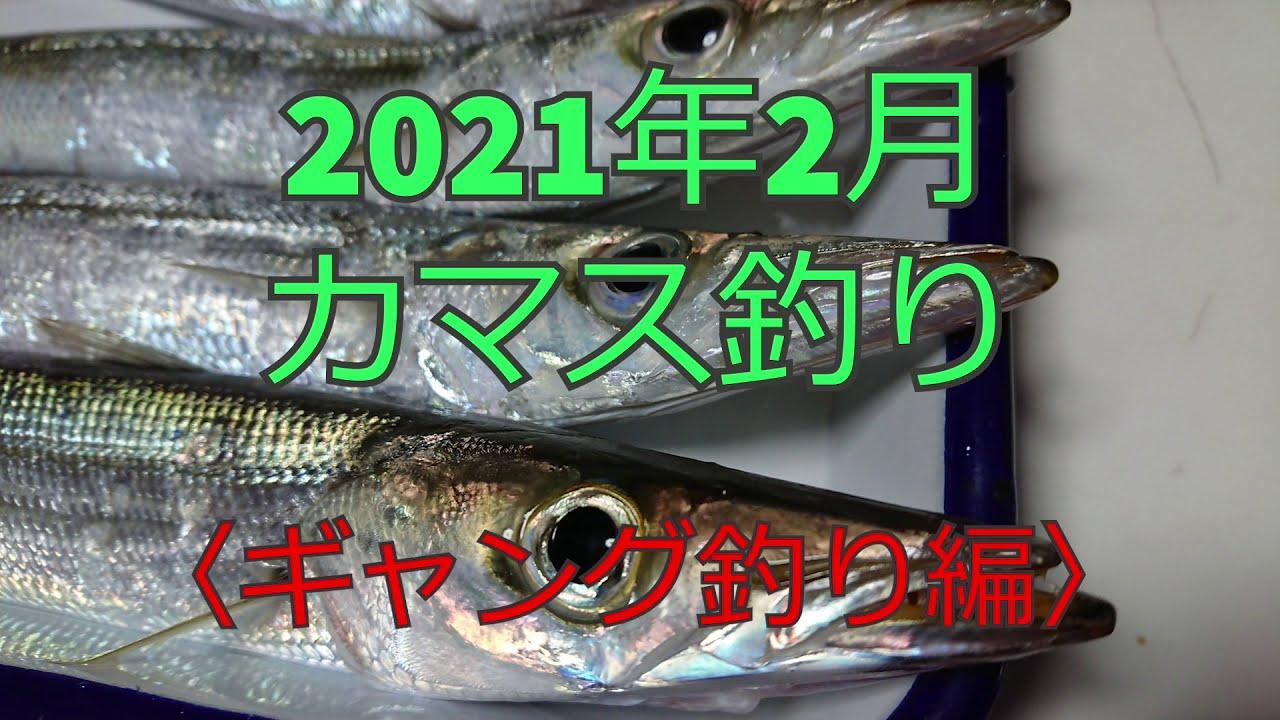 カマスのギャング釣り!2021年2月