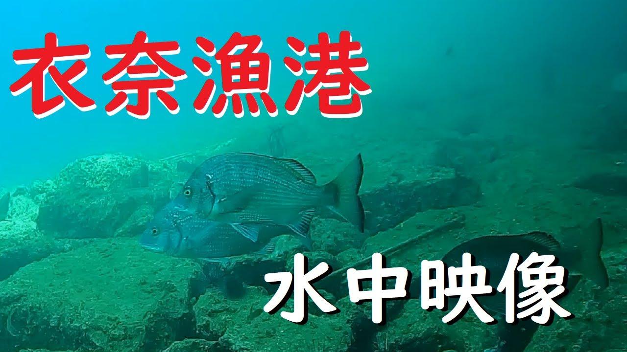 和歌山で人気 衣奈漁港の水中映像