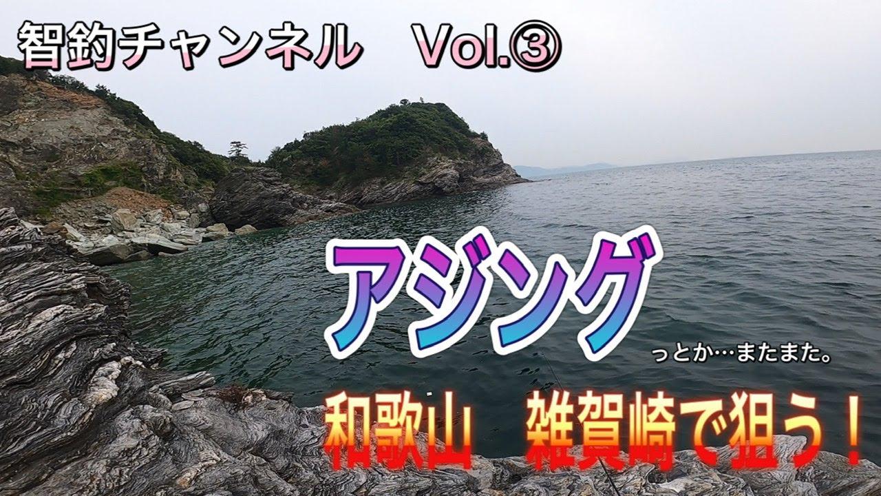 【アジング】雑賀崎でアジは釣れるのか⁉️