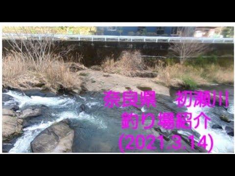 初瀬川アマゴ釣場案内2021.3.14