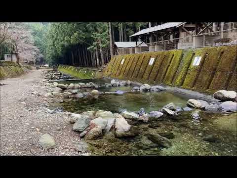 中井渓谷のアマゴ釣り 川上村