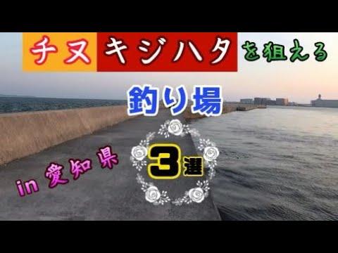 チヌ・シーバス・キジハタが狙える釣り場紹介