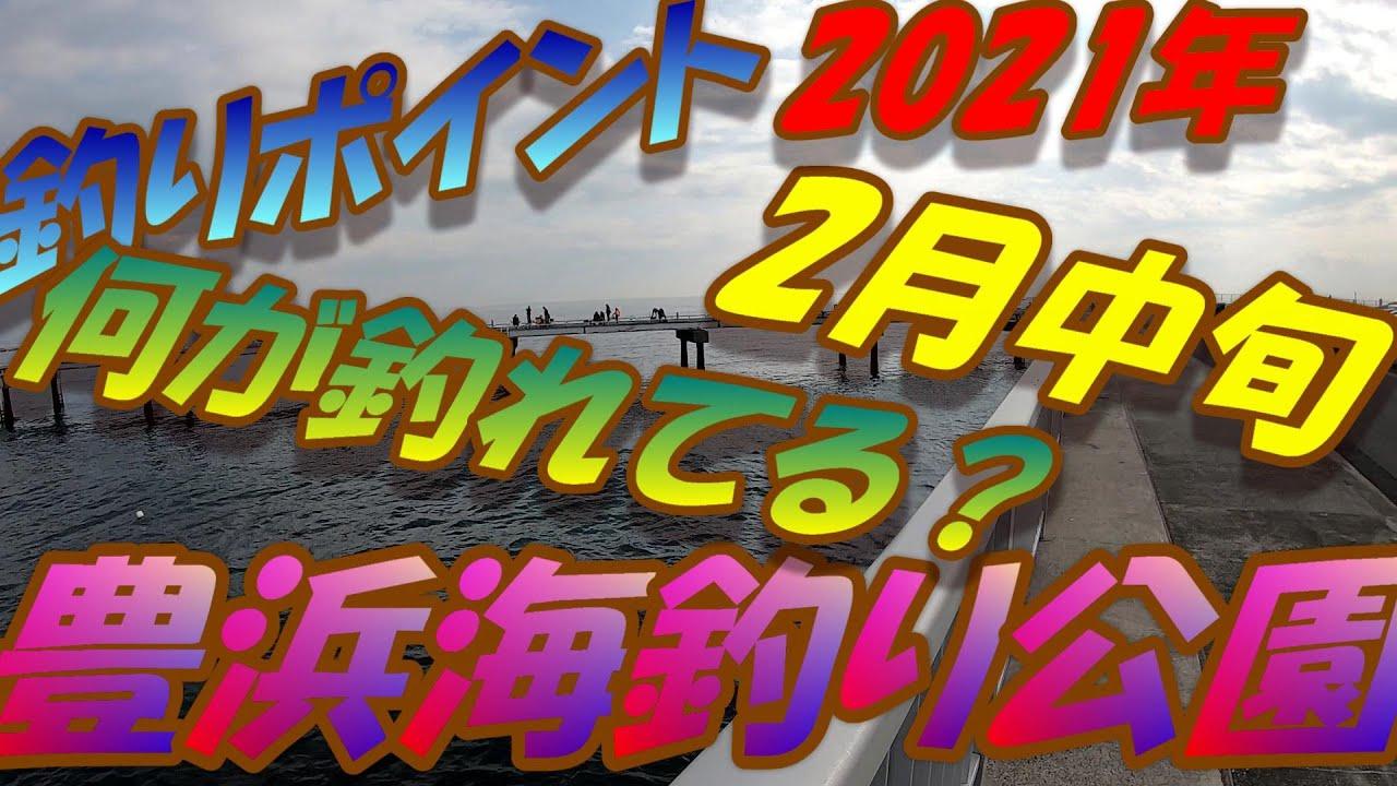 【釣りポイント】豊浜漁港、豊浜海釣り公園2021年2月中旬