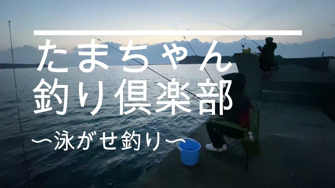 【志摩市】アジの泳がせ釣りで、、