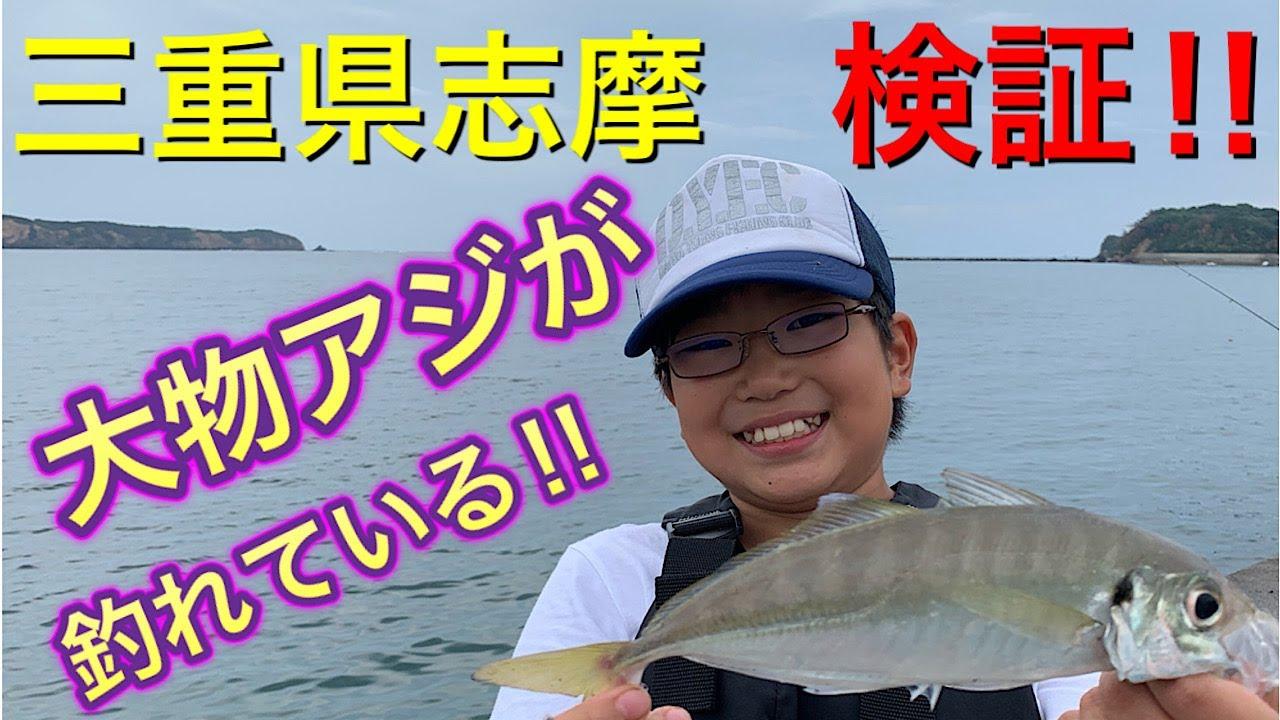 志摩で良型アジが釣れている!!と聞いて検証!