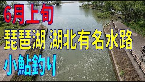 琵琶湖 6月の上旬の小鮎釣り