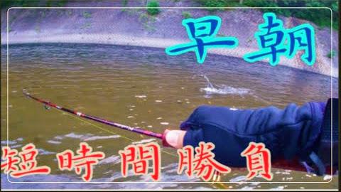 【渓流ルアー】朝マズメのヤマメ釣り
