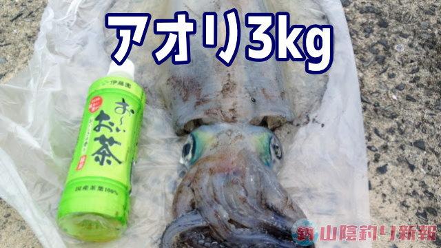 アオリ3kg キター