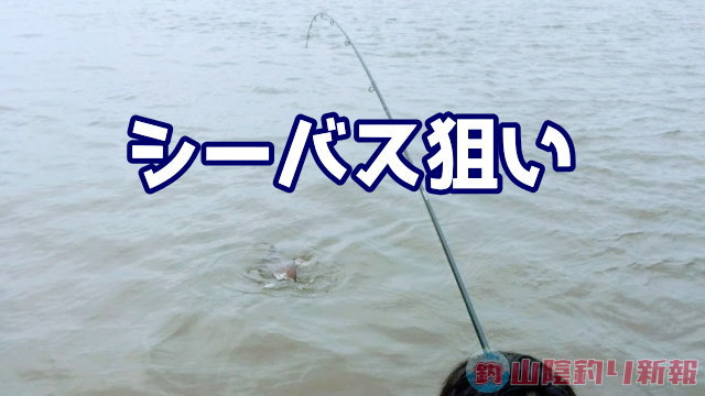シーバス求めて熊本へ