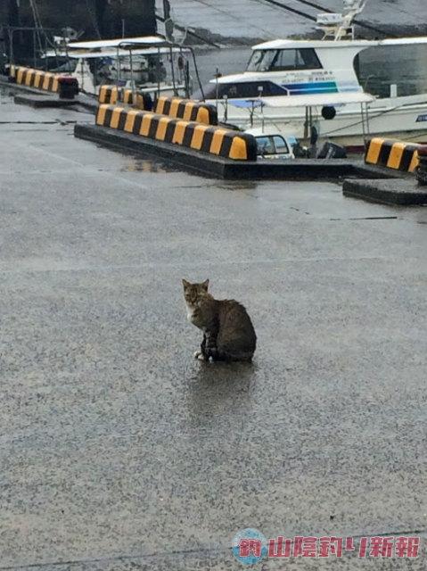 漁港での猫特集!(ΦωΦ)