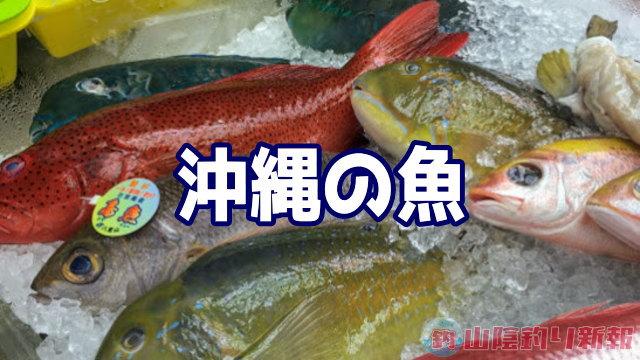 福岡では見れない沖縄の魚たち♪