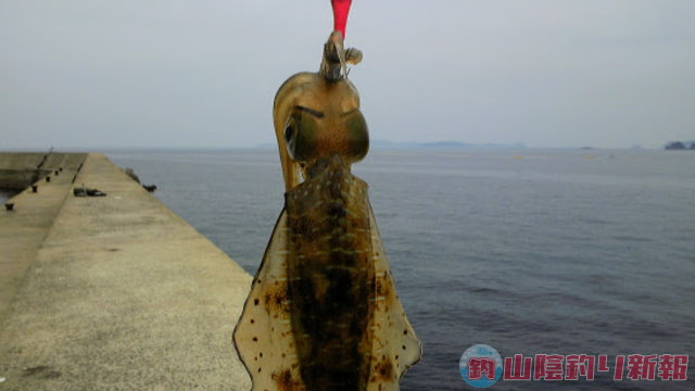 長崎県生月島へサラシを求めて…
